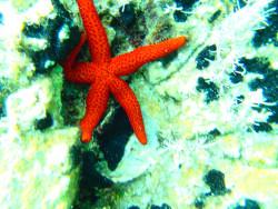 Snorkel-excursie-op-Kreta