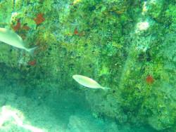 43Snorkelen-Excursie-op-Kreta43