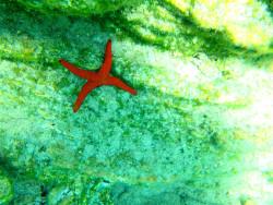 45Snorkelen-Excursie-op-Kreta45