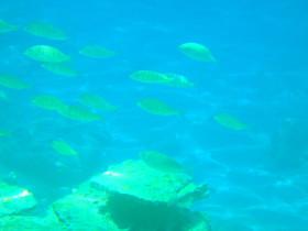 Snorekelen op vakantie op Kreta (57)