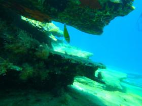 Snorekelen op vakantie op Kreta (60)