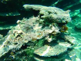 Snorekelen op vakantie op Kreta (8)