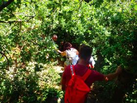 Wandelen en Hiken op Kreta, Active vakanties en excursies (128)