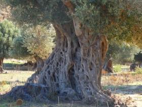 Wandelen en Hiken op Kreta, Active vakanties en excursies (29)