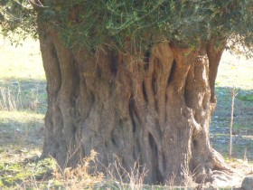 Wandelen en Hiken op Kreta, Active vakanties en excursies (30)