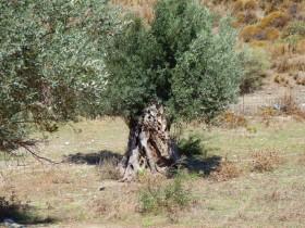 Wandelen en Hiken op Kreta, Active vakanties en excursies (53)