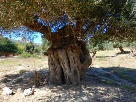 Wandelen en Hiken op Kreta, Active vakanties en excursies (54)