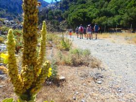 Wandelen en Hiken op Kreta, Active vakanties en excursies (71)